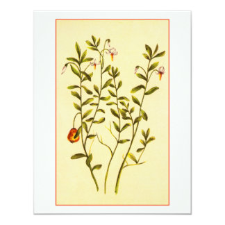 Vintage Illustration of a Cranberry Plant 4.25x5.5 Paper Invitation Card