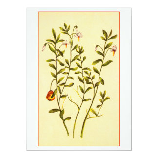 Vintage Illustration of a Cranberry Plant 5.5x7.5 Paper Invitation Card