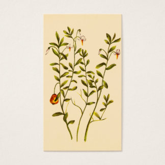 Vintage Illustration of a Cranberry Plant Business Card
