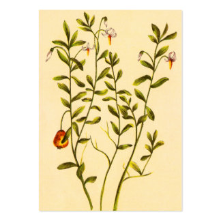 Vintage Illustration of a Cranberry Plant Large Business Card