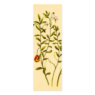 Vintage Illustration of a Cranberry Plant Mini Business Card