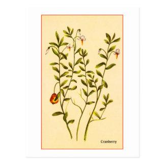 Vintage Illustration of a Cranberry Plant Postcard