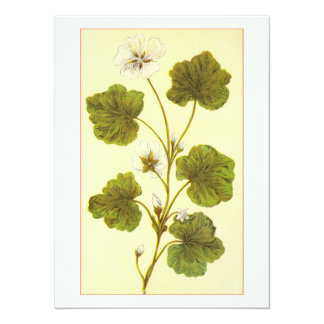 Vintage Illustration of a Round Leaved Mallow Card