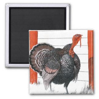 Vintage illustration of a Thanksgiving Turkey Magnet