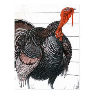 Vintage illustration of a Thanksgiving Turkey Postcards
