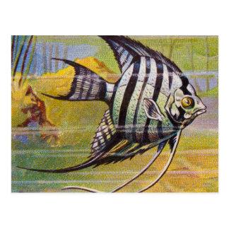 Vintage Illustration Of An Angelfish Postcard