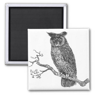 Vintage Illustration of an owl sitting on a branch 2 Inch Square Magnet