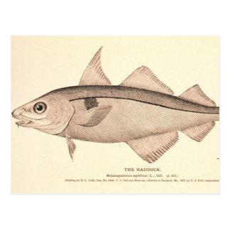 Vintage illustration of Haddock Postcard