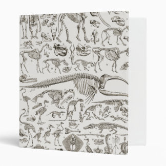 Vintage Illustration of Human & Animal Bones Binder