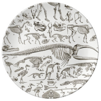 Vintage Illustration of Human & Animal Bones Dinner Plate