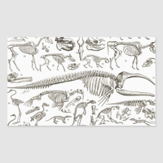 Vintage Illustration of Human & Animal Bones Rectangular Sticker