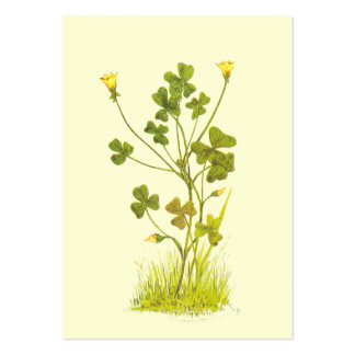 Vintage Illustration of the Yellow Wood-Sorrel Business Card Template