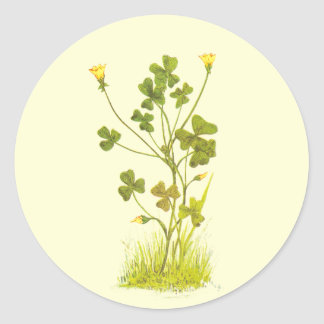 Vintage Illustration of the Yellow Wood-Sorrel Classic Round Sticker