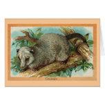 Vintage Illustration - Opossum Greeting Card