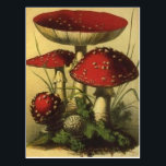 "Vintage Illustration Postcard<br><div class=""desc"">Amanita muscaria</div>"