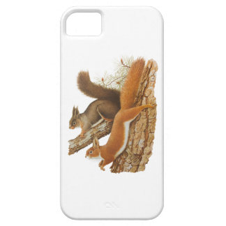 Vintage Illustration, Squirrels In A Tree iPhone 5 Cases