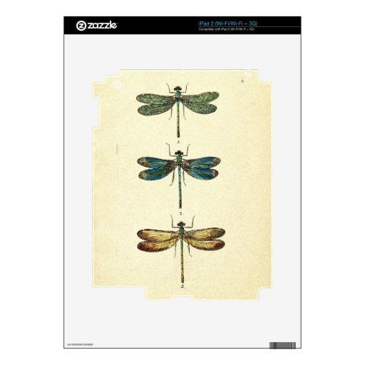 Vintage Illustration, Three Dragonflies iPad 2 Decal