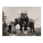 Vintage India, Travelling by elephant Postcard