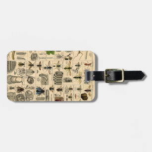 Vintage Insect Chart Luggage Tag