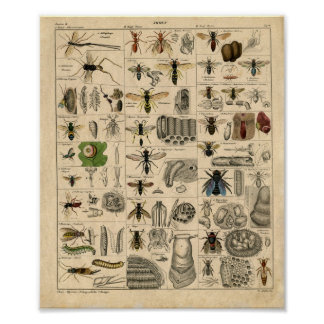 Vintage Insect Diagram Poster