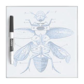 Vintage Insect Image | Beetles | Blue Dry-Erase Board