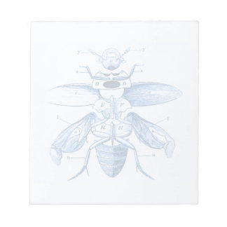 Vintage Insect Image | Beetles | Blue Notepad