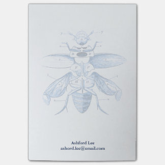 Vintage Insect Image | Beetles | Blue Post-it Notes