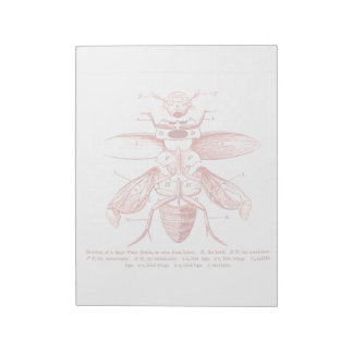 Vintage Insect Image | Beetles | Red Note Pad