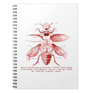 Vintage Insect Image | Beetles | Red Notebook