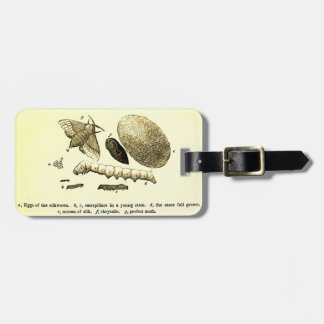 Vintage Insect Image | Silkworm | Moth Luggage Tag