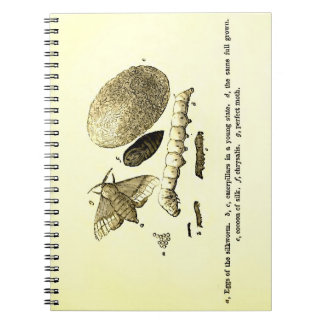 Vintage Insect Image | Silkworm | Moth Notebook