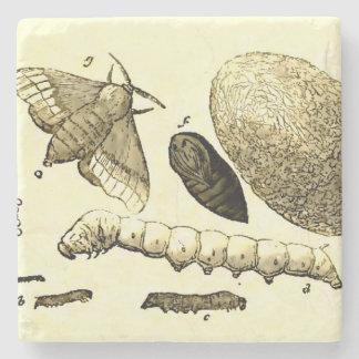 Vintage Insect Image | Silkworm | Moth Stone Coaster