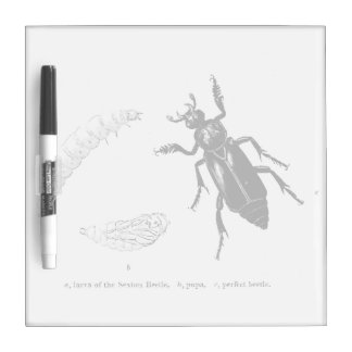 Vintage Insect | Sexton Beetle Dry-Erase Board
