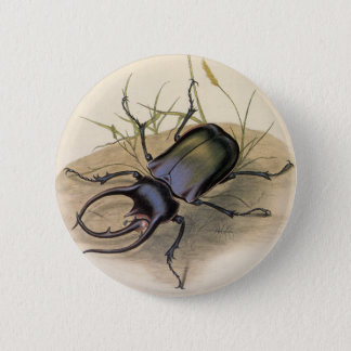 Vintage Insects and Bugs, Rhino Rhinoceros Beetle Button