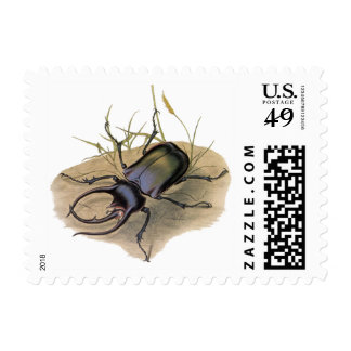 Vintage Insects and Bugs, Rhino Rhinoceros Beetle Stamp