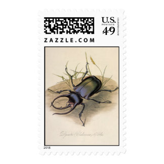 Vintage Insects, Bugs, Rhino Rhinoceros Beetle Postage Stamps