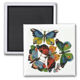 Vintage Insects or Bugs, Beautiful Butterflies 2 Inch Square Magnet