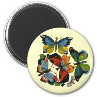 Vintage Insects or Bugs, Beautiful Butterflies Magnet