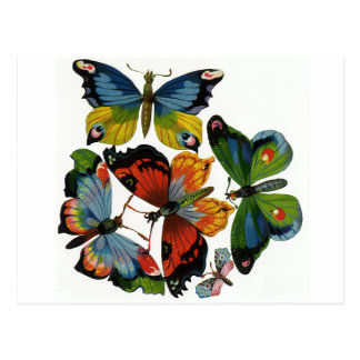Vintage Insects or Bugs, Beautiful Butterflies Postcard
