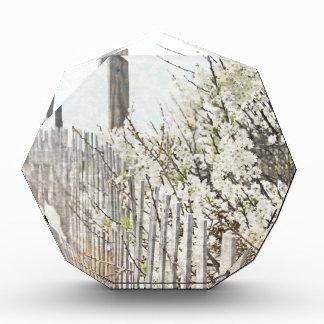 Vintage Inspired Cape Cod White Flowers Sand Fence Acrylic Award