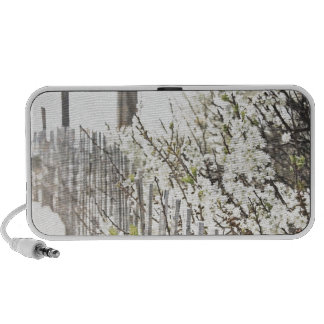 Vintage Inspired Cape Cod White Flowers Sand Fence iPhone Speaker