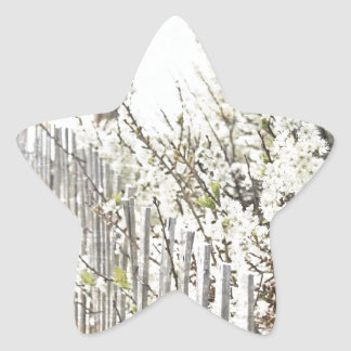 Vintage Inspired Cape Cod White Flowers Sand Fence Star Sticker
