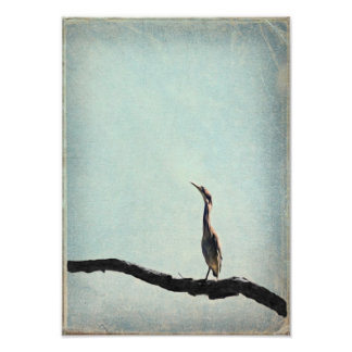 Vintage Inspired Green Heron on Pale Blue Sky Photo Print