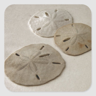 Vintage Inspired Sand Dollars Stickers