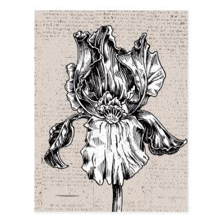 Vintage Iris Drawing Postcard