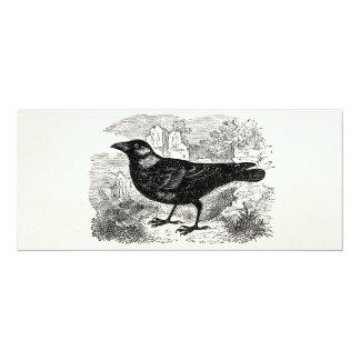 Vintage Jackdaw Crow Bird Personalized Birds Crows Card