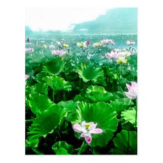 Vintage Japanese Lotus Pond Old Japan Postcard