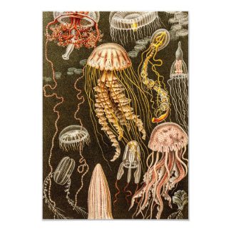 Vintage Jellyfish Antique Jelly Fish Illustration Card