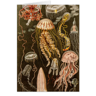 Vintage Jellyfish Antique Jelly Fish Illustration Cards