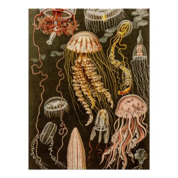 silvervintage Vintage Jellyfish Antique Jelly Fish Illustration Poster